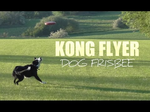 Kong Flyer - The Ultimate Dog Frisbee