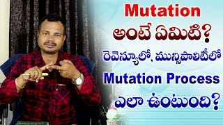 What is the Meaning of Mutation What is the Process of Mutation in Revenue and Municipals