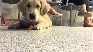 Preventing Food Guarding With Your Puppies And Dogs
