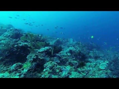 Scuba Diving 'Barracuda Point' Papua New Guinea