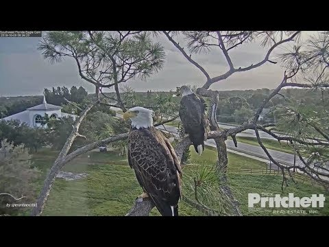 SWFL Eagles. ~ M15's Wing Feather... Slo - Mo