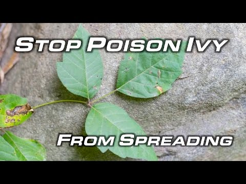 How To Get Rid Of Poison Ivy - Will Primos