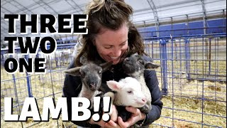 And so it begins.❤️(the first day of lambing): Vlog 263
