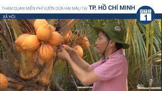 Tham quan miễn phí vườn dừa hai màu ở TPHCM | VTC1