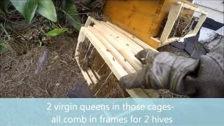 A new beekeeper gets her bees- Houston heights