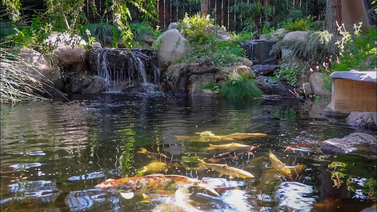 50 000 dollar backyard koi pond youtube for Koi pond upkeep