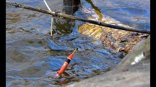 КАРАСИ ЛАПТИ В РАЗРУШЕННОМ ГОРОДЕ Рыбалка на поплОвок Крупный карась малые реки