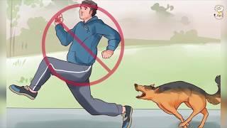 ماذا تفعل اذا هاجمك كلب مفترس ؟   افكار قد تنقذ حياتك جزء 1