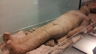 Mummies: Ancient burial chamber uncovered in Egypt; Modern pet mummies - Compilation