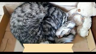 Почему кошки любят картонные коробки?