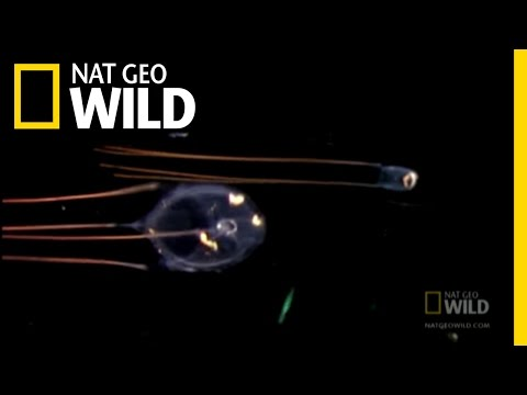 Itsy Bitsy Adorable Death | Nat Geo Wild