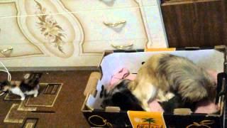 Собака родила котят