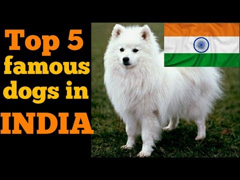 Top 5 famous dogs in India | Indian dog breed |