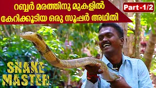 Vava Suresh seizes a fierce King Cobra from 30m tall Rubber Tree | SNAKE MASTER 31-03-2016 PART 01