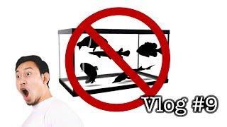 Top 5 WORST Native Fish to Keep in a Home Aquarium - VLOG