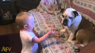 Baby argues with dog for pooping