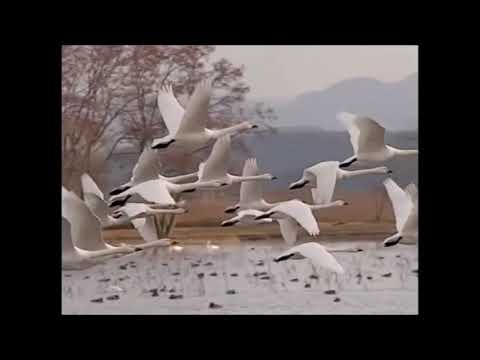 Kitchens of Distinction - Here Come the Swans