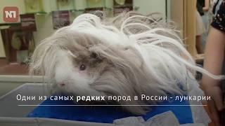 Датские эксперты оценили российских морских свинок