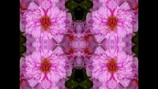 moss rose portulaca (So Glad You