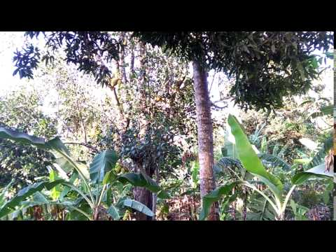 Comoros - Travel & Tourism - Finis Fruit Plant