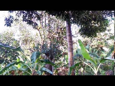 Comoros - Travel & Tourism - Finis Fruit Plant