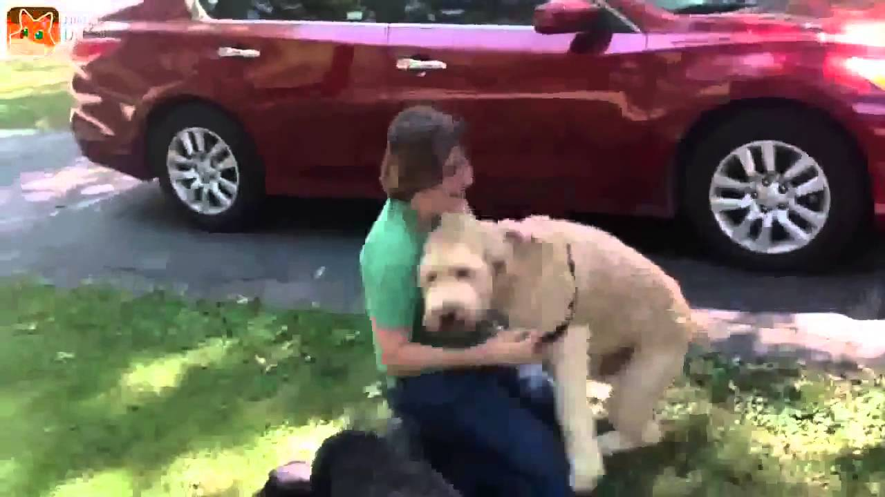 Dogs Welcoming Owners Home Compilation Top 2016 Youtube