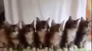 Коты танцуют под музыку! Коты-танцоры! Cats dancer. Прикол!