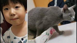 宿敵6歳児にバレぬよう恐る恐る逃げる灰猫、白モフは余裕の表情
