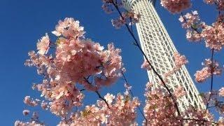 Токио Скай Три и цветущая сакура. Нереально красиво(Подробная информация о курсах манги: http://goo.gl/Wj795x Подписаться на уроки японского: http://lifeinjapan.ru/index.php/uroki-yaponskogo/..., 2014-03-18T07:48:33.000Z)