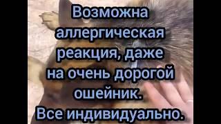 Как выбирать и правильно носить ошейник от клещей и блох для собак