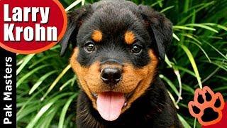 Raising a Puppy / My Puppy Routine / Pak Masters Dog Training