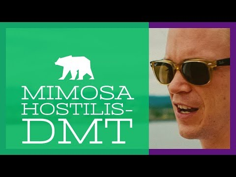 Mimosa Hostilis & the NATURAL DMT Experience