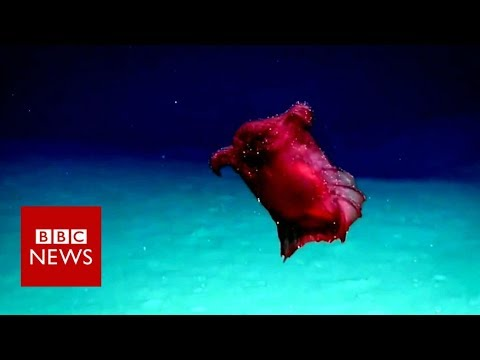 'Headless chicken sea monster' - BBC News