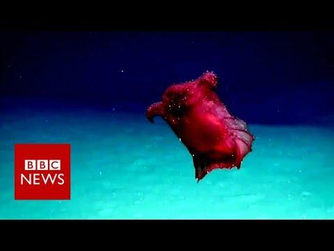 Stranger Zone - Headless Chicken Monster Filmed Off The Antarctic Coast
