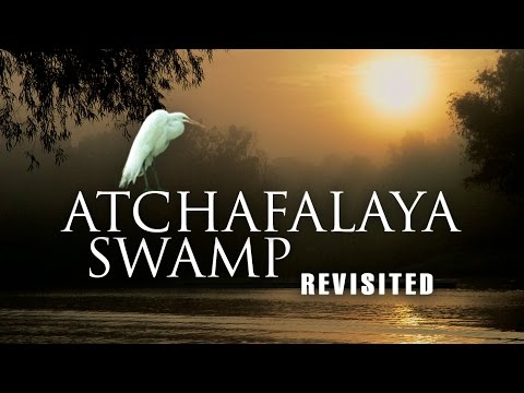 Atchafalaya Swamp Revisited