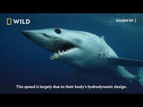 Sharks 101  - Sharkfest On National Geographic Wild