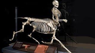 क्या अश्व मानव होते हैं? नहीं, तो ये कंकाल कहां से आया? Mysterious Centaur skeleton Tennessee -Hindi