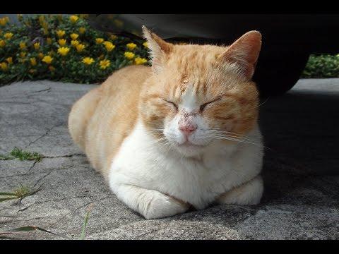 ねこ島に行って来たので猫写真貼っていく【前編】