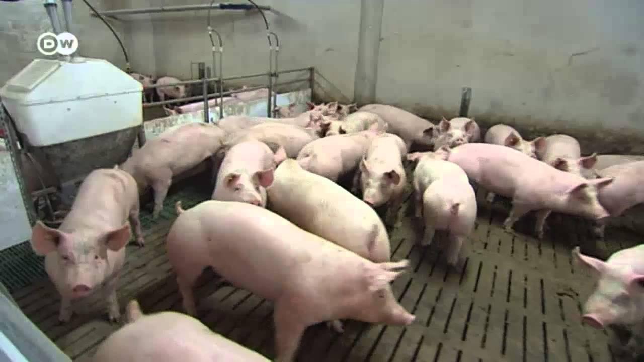 boom schweinefleisch aus deutschland made in germany