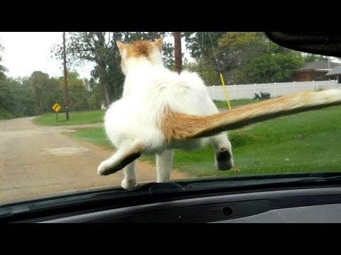Funny ANIMALS: Try to BLOCK YOUR LAUGH - Best FUNNY ANIMAL compilation