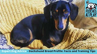Dachshund Breed Profile : facts, health and training tips for dogs   S5 Ep6   Pooches at Play