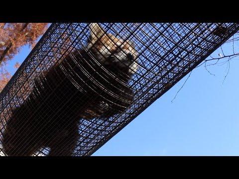 京都市動物園 総集編 Kyoto City Zoo summary compilation