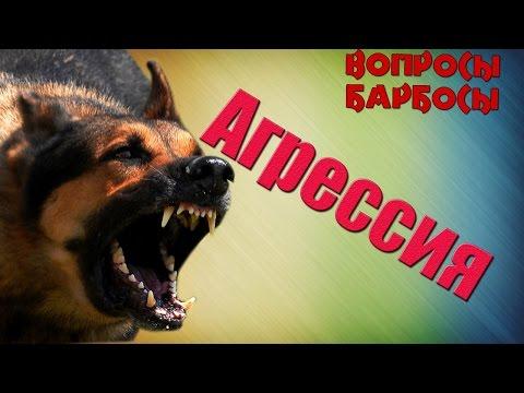 Как отучить вашу собаку реагировать на других собак