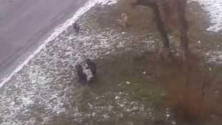 Групповое бездомных собак