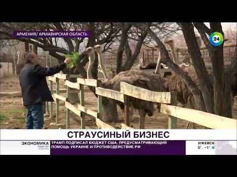 Выгодный бизнес: в Армении набирают популярность страусиные фермы