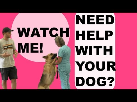 Aggressive German Shepherd Training/How to stop your barking dog!