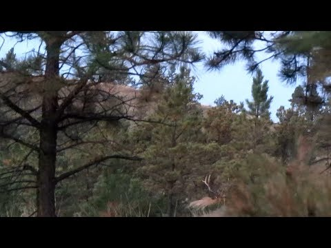Missouri Breaks Elk Hunt 2014