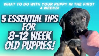 5 Essential Tips For 8-12 Week Old Puppies