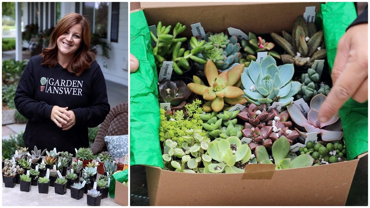 Succulent Unboxing Garden Answer Youtube