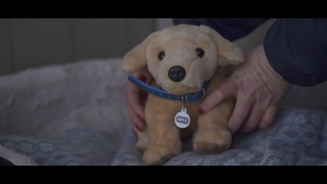 RSPCA release tear jerking Christmas advert   YouTube